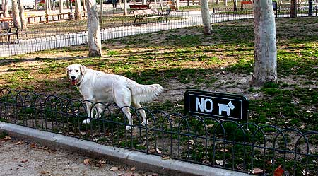 Perros y problemas en el Parque de El Retiro (Madrid).