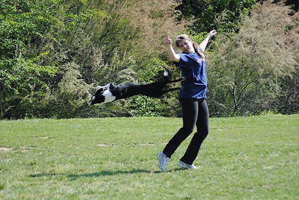 Purina TONUS Disc Cup.