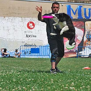 Dog frisbee. Ashely Whippet Qualifier Spain. Trofeo Caninu.