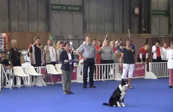 World Dog Show 2012, Campeonatos del mundo de obediencia, heeelwork to music y freestyle. Sguelo por livestream.