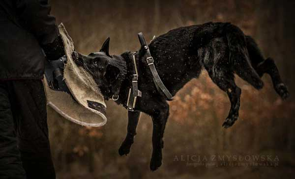 Los perros de <strong>Alicja Zmysowska</strong>