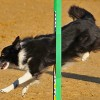 <strong>Agility</strong> en Gerona, Madrid, Valencia y Mlaga