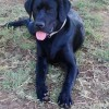 Eddie, <strong>perro de asistencia</strong> &#8220;en prcticas&#8221;