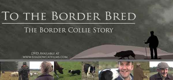 La Historia del Border Collie (documental)