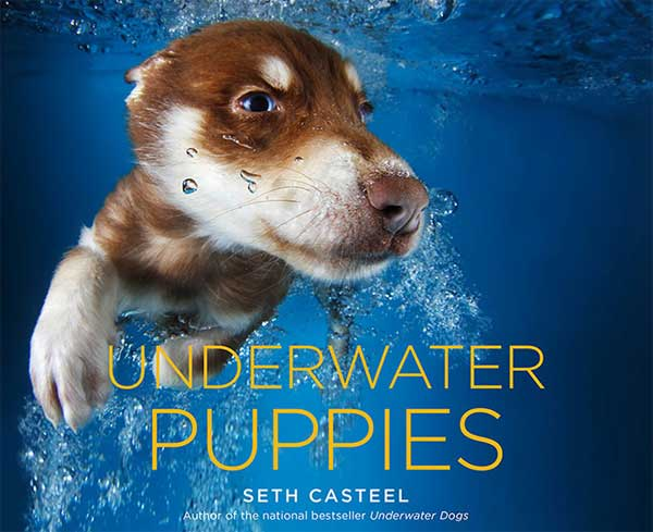 <strong>Underwater Puppies</strong>, de Seth Casteel ¡claro!