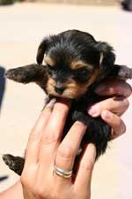 Estimulación temprana en cachorros