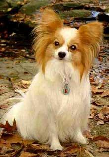 Problemas y soluciones para un pelaje sano en el perro