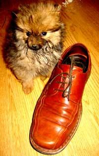 Perro pequeño, suele ser mal comedor