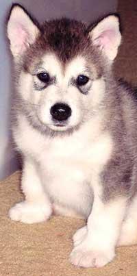 Socialización e imprinting del cachorro