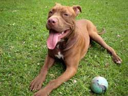BOE con la normativa sobre perros potencialmente peligrosos