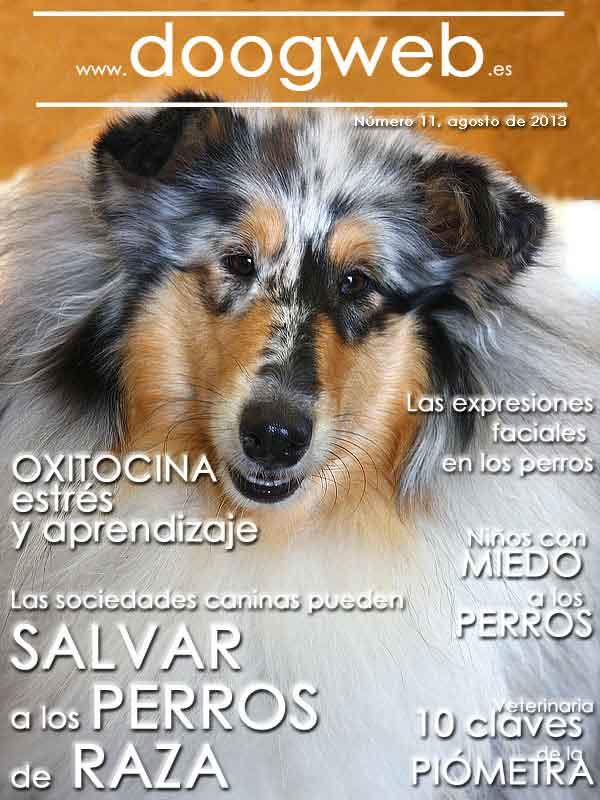 Revista gratis de doogweb nº 11, agoto 2013.