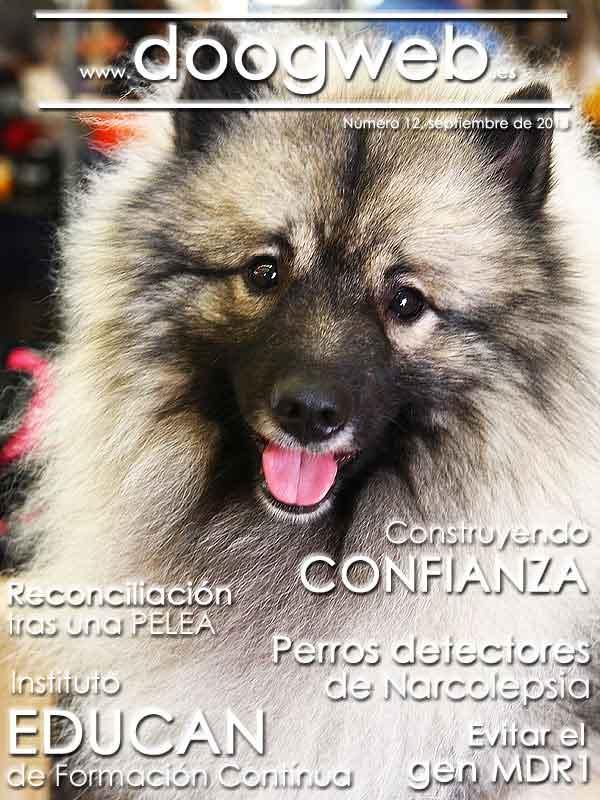 Revista gratis de doogweb número 12.