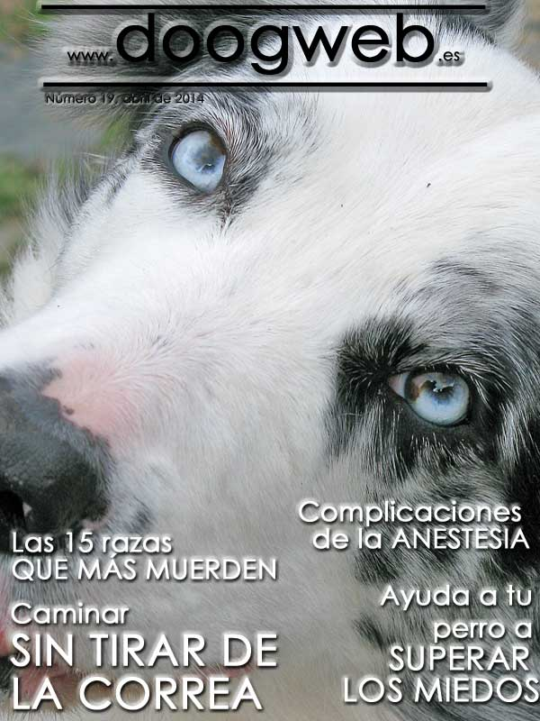Revista gratis de perros, doogweb 19, abril 2014.