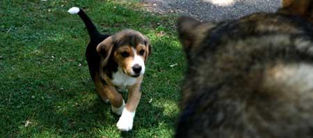 Cuándo empezar a educar a un cachorro...