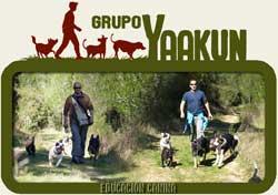 Grupo Yaakun