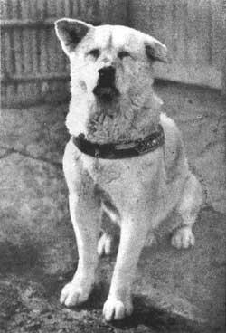 """Fotografía real de Hachiko """"el perro fiel"""""""
