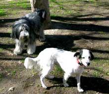 Multas por perros sueltos