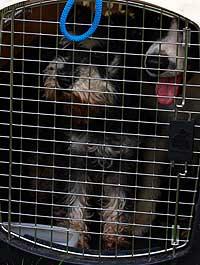 Perros en un transportín