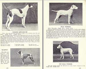 Libro Dogs of all Nations (1915)