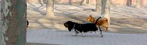 Cómo actuar ante un perro envenenado