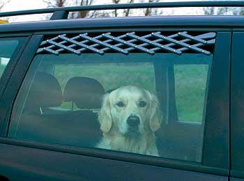 Cómo prevenir el golpe de calor en los perros.