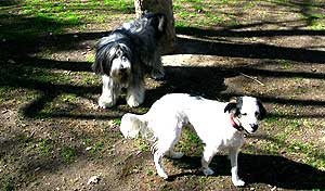 Recurso de multas por perros sueltos.
