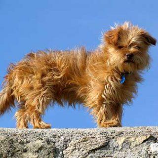 Perros con miedo a los petardos y la feromona del apaciguamiento.