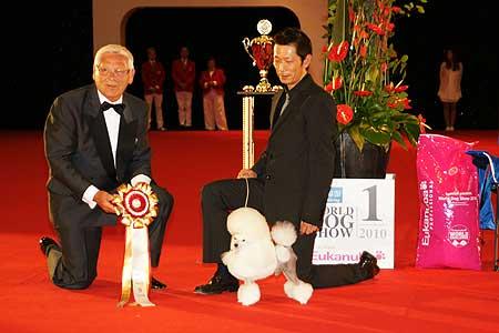 Best In Show World Dog Show 2010.