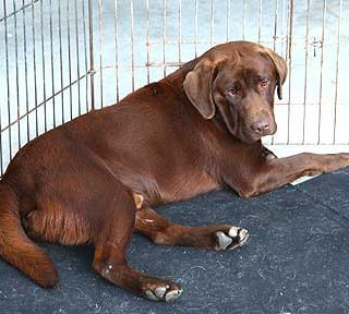 Sheila Crispín presidirá el Consejo para el control de la cría canina, en Inglaterra.