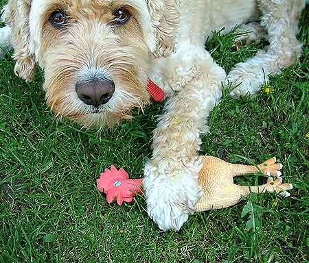 Los beneficios del juego en el perro