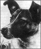 Laika, la primera perra en órbita
