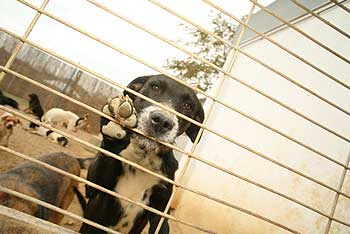 10 razones para no comprar perros en tiendas