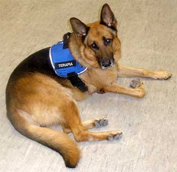 Terapia con perros, Airon