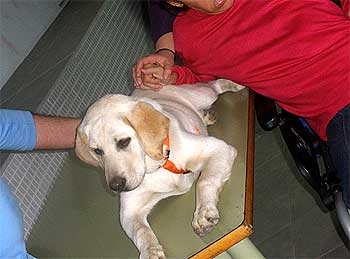 Perros de terapia, Guiness