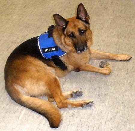 Homenaje a Airon, un gran perro de terapia. www.doogweb.es