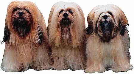 Cinco comportamientos naturales en el perro que pueden convertirse en problemas serios de conducta.