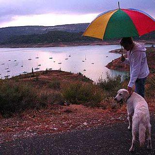 La comunicación entre el hombre y el perro.