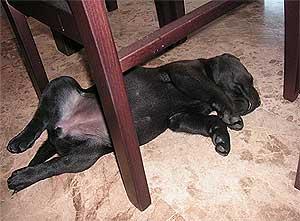 El descanso en los perros, por Rosana Álvarez Bueno.
