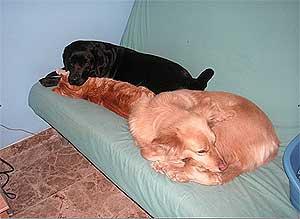 El descanso en los perros, por Rosna Álvarez Bueno.