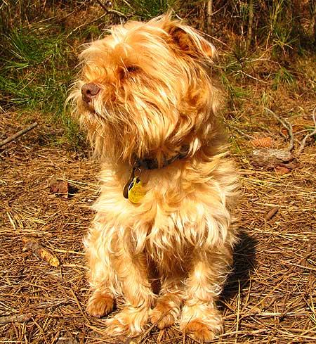 Leishmaniosis en los perros, mitos y realidades (y II)