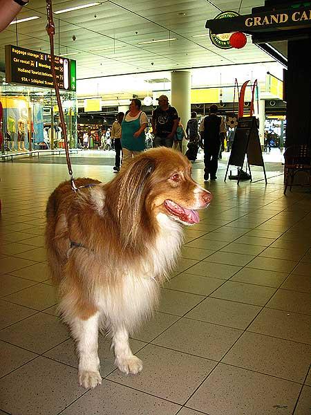 Perro en el aeropuerto de Amsterdam.