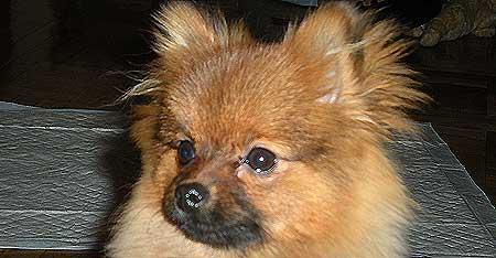 Los perros imitan en su comportamiento a los humanos