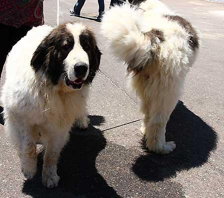 10 efectos del castigo físico en los perros