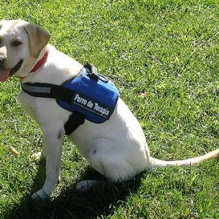 Perros de Terapia y trastornos de espectro autista