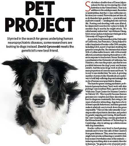 La genética de los perros ayudará a los humanos.