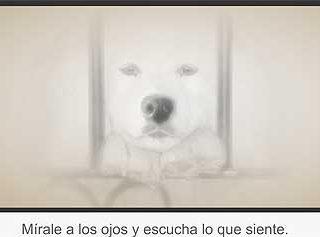 A.S.P.A. Asociación Socuellamina Protectora de Animales