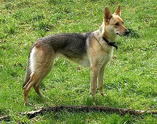 Can de Palleiro, en busca de su origen