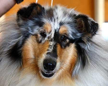 Horarios del sábado 2 de octubre para la Exposición Nacional Canina de Madrid 2010 (Grupos 1, 3, 5, 6, 7 y 10)