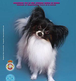 Exposición Canina Nacional de Madrid.