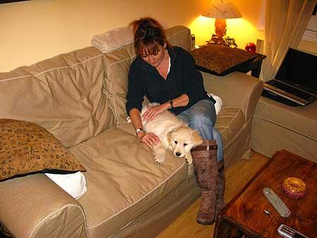 Es muy importante que el perro se deje manipular con normalidad en todo tipo de situaciones.